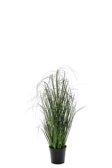 Billede af Græs, 70 cm