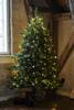 Billede af Anni Juletræ, 1,5 m