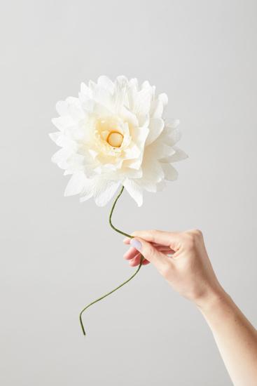 Billede af Papirsblomst, grand dahlia