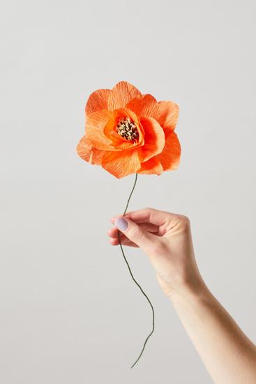 Billede af Papirsblomst, poppy