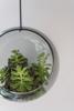 Billede af Hanging plant bubble, M